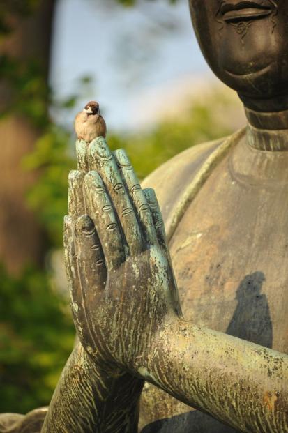 statues_buddha_asakusa_birds_8319