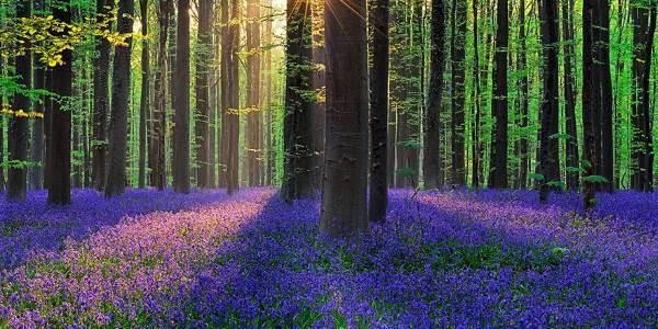 La Foresta Blu Hallerbos