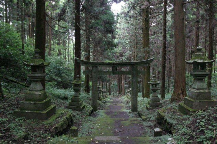 Forest-Shrine-in-Japan-1.jpg