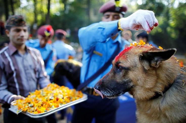 Nepali-police-officers-worship-dog-on-Kukur-Tihar.jpg